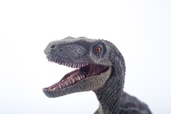 Macro Head shot of a great Velociraptor dinosaurs toy with open mouth in attack position on white background