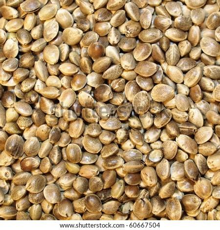 Macro Hemp seed