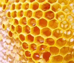 macro honeycomb with honey