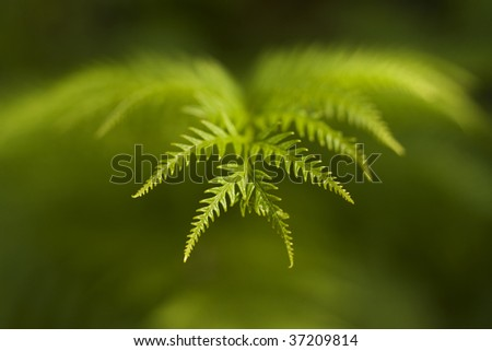 Macro image of a leaf with a blurred background