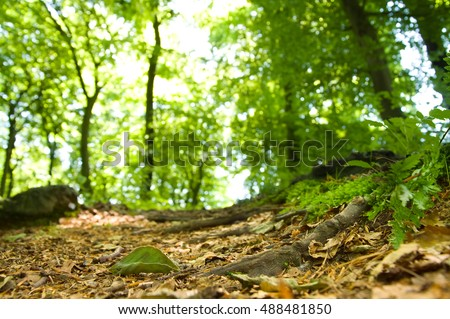 Macro image of the ground of a forest. Small depth of field with focus on the dry beech leaf in the foreground and parts of a root