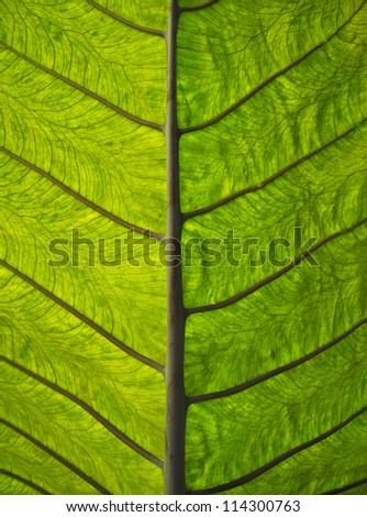 macro image showing the underneath side of a leaf