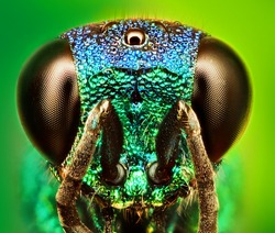 macro insect extreme sharp