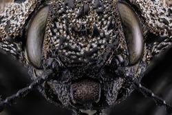 Macro Insect Eyes