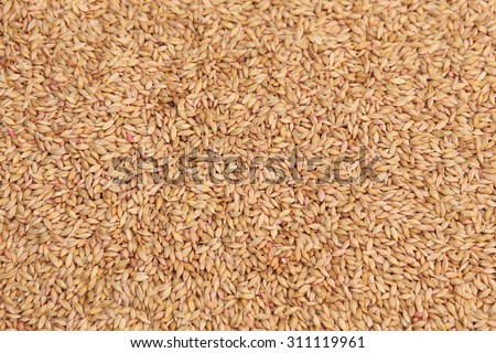 macro isolated texture piles selected grain for sowing in natural lighting