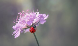 macro lady bug and Flower