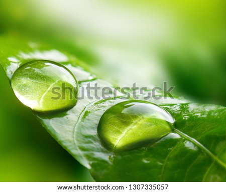 Macro Large raindrops on a leaf in tropical forest.