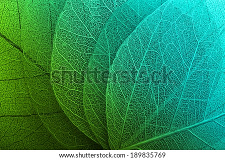 Macro leaves background texture