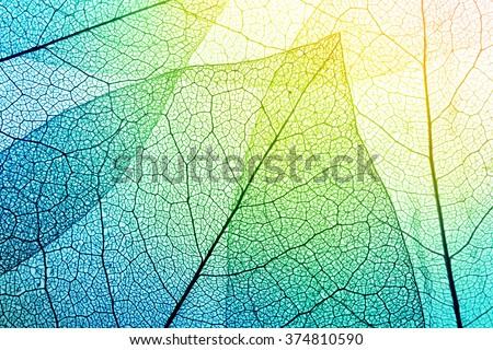 Macro leaves background texture.