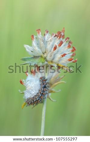 macro of a caterpillar