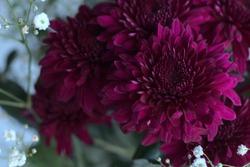 macro of a dark mauve flower in a bouquet