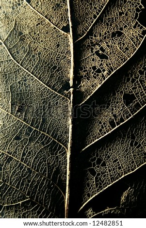 macro of a decomposed leaf