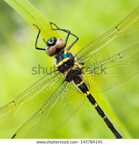macro of a dragonfly - stock photo