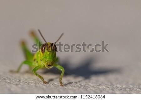 Macro of a grasshopper #1152418064