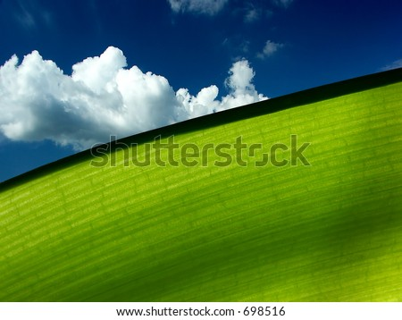 Macro of a green leaf with a blue sky with white clouds as background - ecology concept, copy space