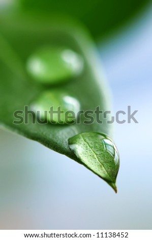Macro of a green leaf with water drops