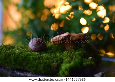macro of an ant and a snail