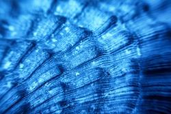 Macro of blue Sea shell texture
