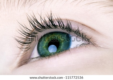 Macro of Boys Eye