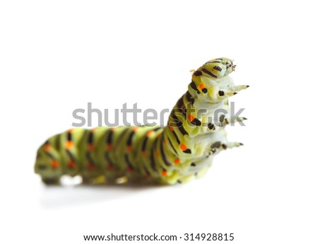 Macro of butterfly larva isolated on white, low angle view