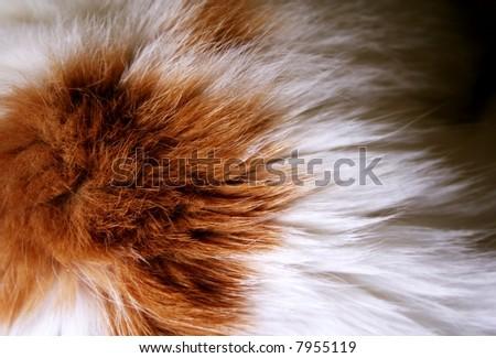 macro of cat fur