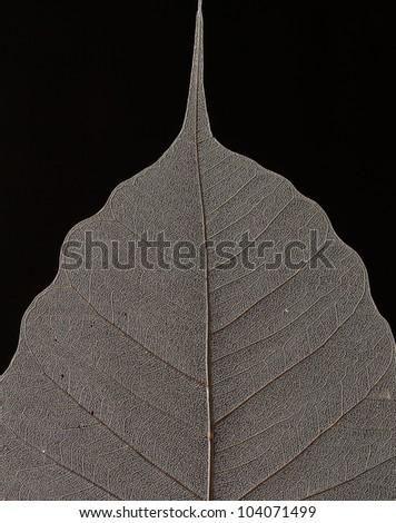 Macro of Dry Leaf Pattern