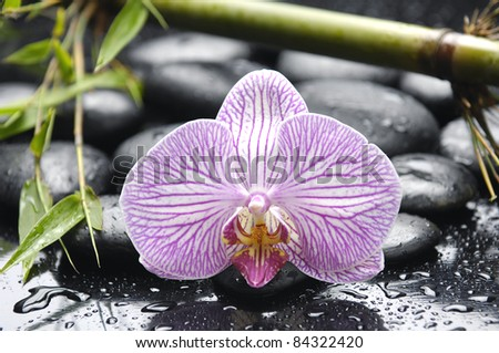 Macro of elegant orchid with fresh green bamboo on pebbles in water drops