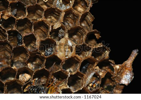 Macro of exposed, dead wasps nest.