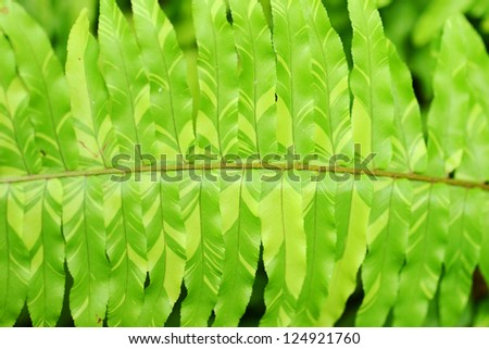 Macro of fern leaf