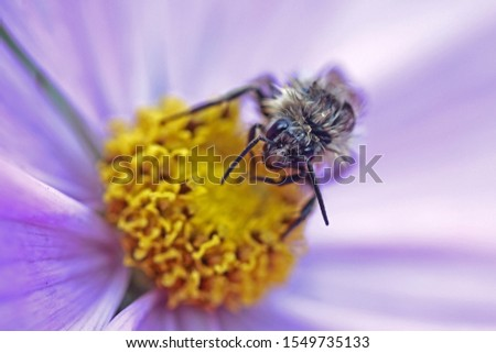 macro of flower and wasp