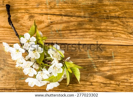 Macro of flowering twig on wood background for mothers day card, invitation cards, wedding invitation and greetings card, floral backgrounds, copy space