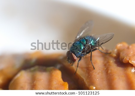 Macro of fly on the meat food