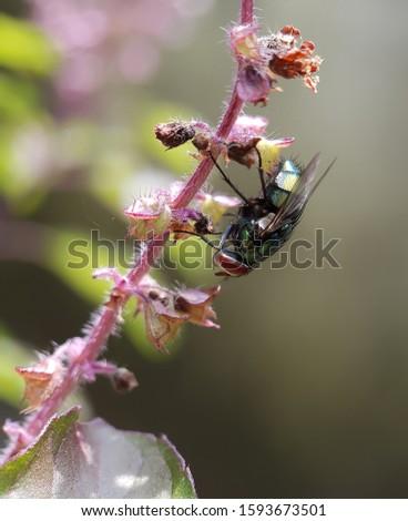 macro of fly taken with smartphone