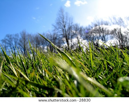 Macro of fresh green grass ... blue sky and trees in the background.