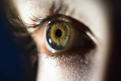 Macro Of Green Female Eye Iris