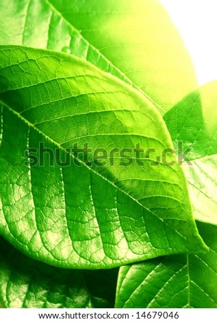 macro of green leaves
