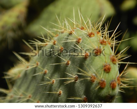 Macro of nopal pads with thorns #1309392637