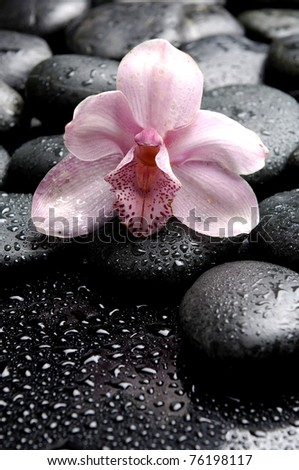 Macro of orchid on wet pebble