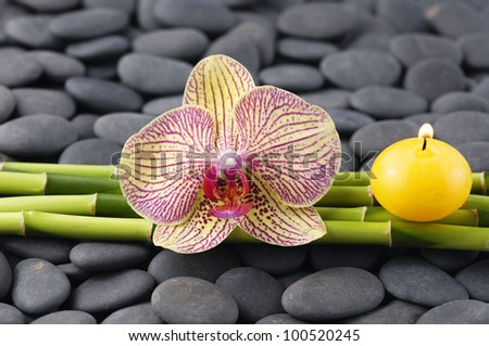 Macro of orchid with candle and thin bamboo grove on zen stones
