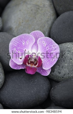 Macro of pink orchid on pebbles