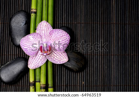 Macro of pink orchid with bamboo grove and black stone