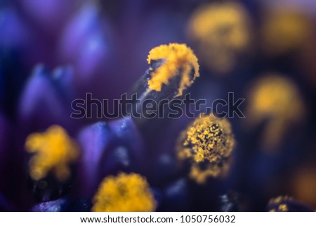 Free photos small purple flowers with yellow stamens avopix macro of purple flowers with yellow pollen 1050756032 mightylinksfo