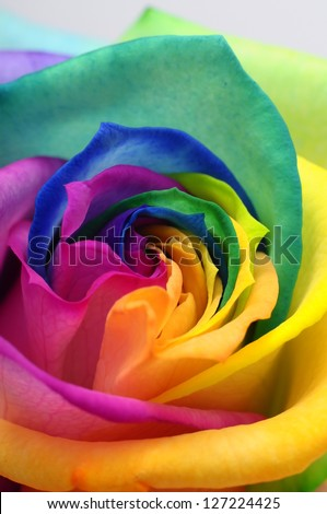 Macro of rainbow rose heart and colored petals