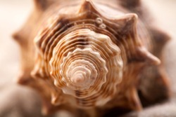Macro of seashell shows beautiful detail