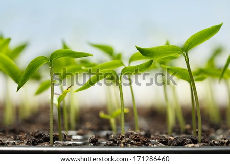 Macro of seedlings potted in peat tray over blue sky background