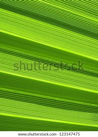 Macro of tropical palm leaf - stock photo