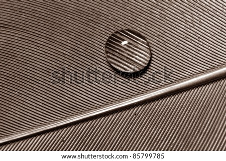 Macro of water drop on feather detail pattern