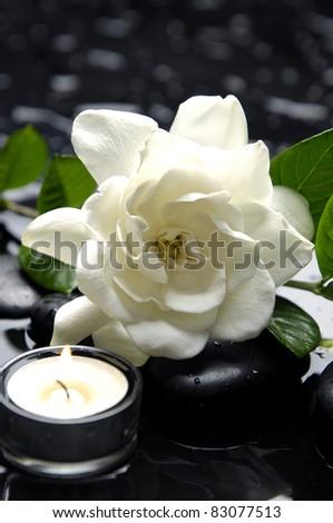 macro of white gardenia flowers with candle on pebble - stock photo