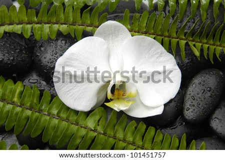Macro of white orchid with fern on pebbles