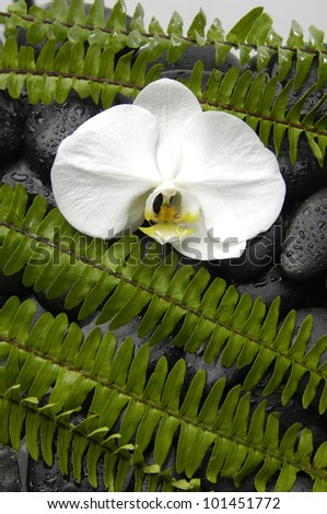 Macro of white orchid with set of fern on pebbles background